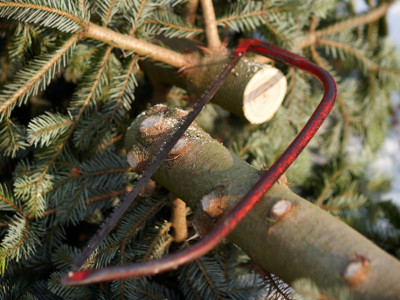 EVINTA_Weihnachtsfeier_Weihnachtsbaumschlagen_Säge auf Baumstamm liegend